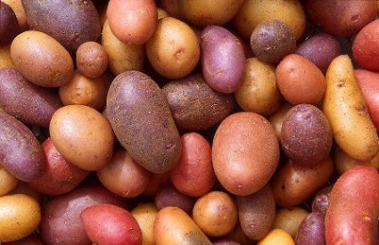 Stare sorte krumpira dolaze u modu Krumpir_wiki