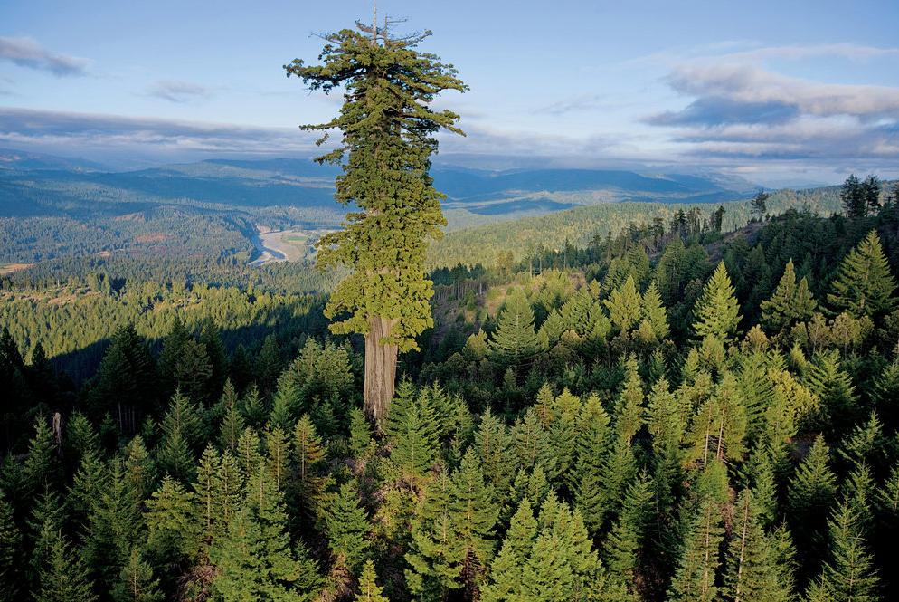 Le vivant, c'est trop cool ! (faune, flore, etc.) Redwood