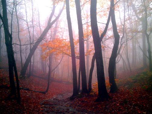 Najbolje fotografije Mist-woods