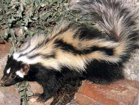 un animal à découvrir , blucat (5août)trouvé par ajonc 28zct31n