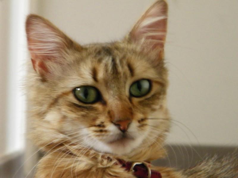 Urgent pour la belle akita Pépita dans le 63 DECEDEE - Page 13 Photo%20213