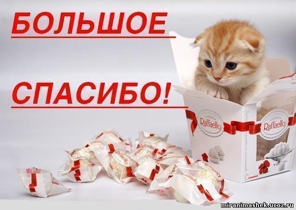 """Десерт """"Пальчики оближешь"""" с птичьим молоком - Страница 5 177778205"""