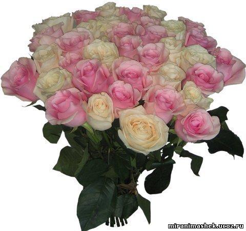 Поздравляем Ярослава (Ведьмо4ка)с днем рождения!!!!! 500527423