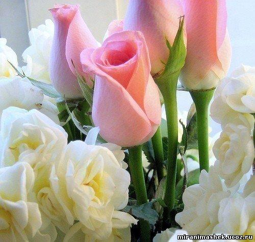 Поздравляем Светлану(Украиночку) с днем рождения!!!!! 730666309