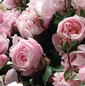 56. Gönülçelen -Inima furata - Heart Stealer - General Discussions - Comentarii - Pagina 37 Trandafirii-nahema