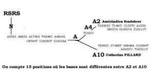 Génétique généalogie et histoire font-ils bon ménage? - Page 2 Gadn013pic1-300x142