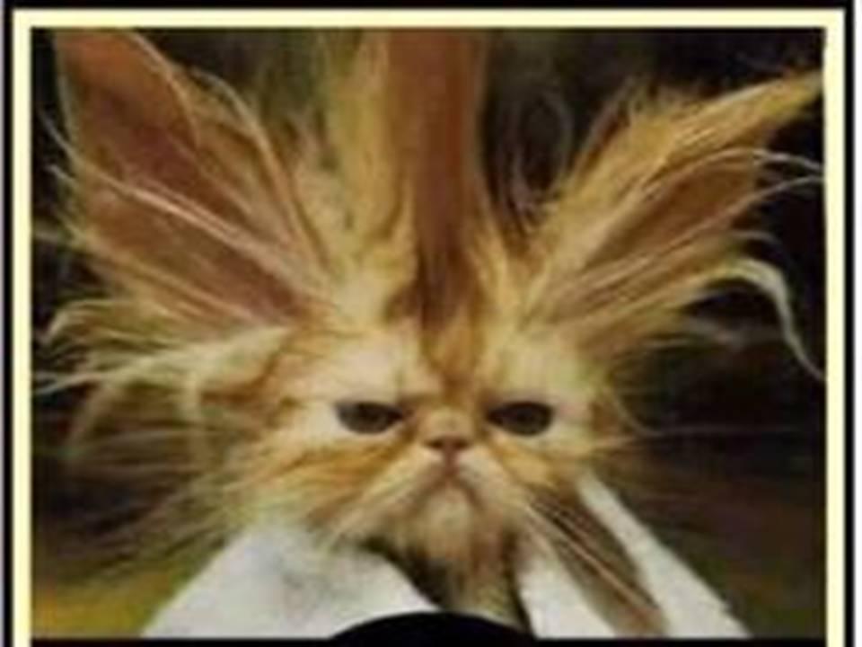 BON MARDI A TOUS...... Bad-Hair-Day