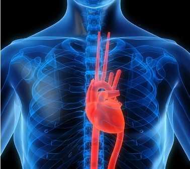 [Mjeksia islame] Udhëzimi i Profetit për trajtimin e sëmundjeve të zemrës Zemramjeksiaislame