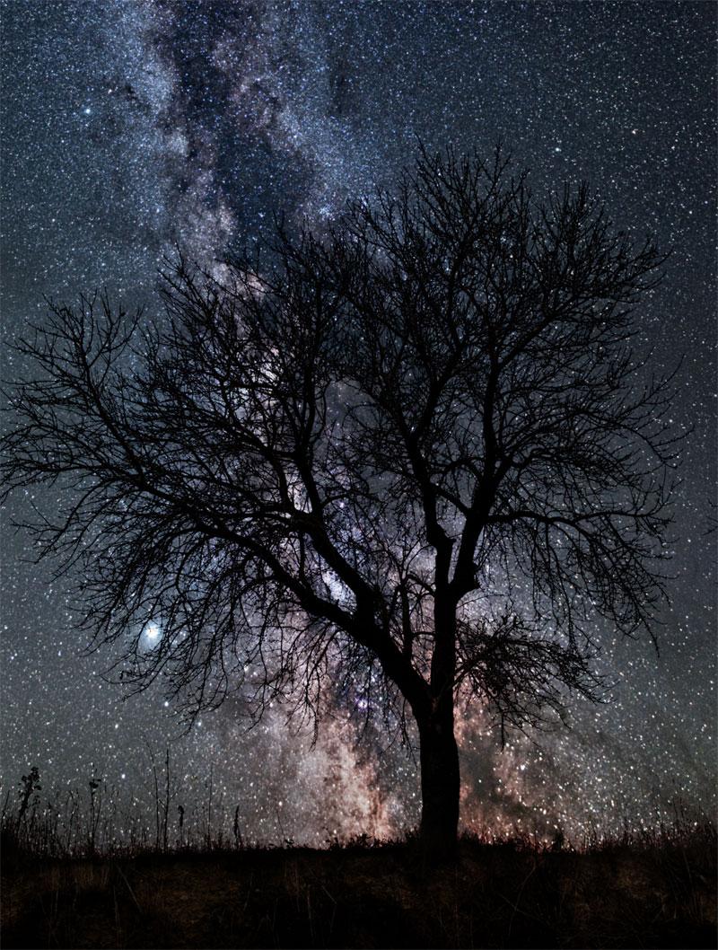 Najbolje astro fotografije  - Page 4 Composite_milky_way_tree_hi
