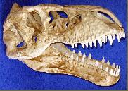 Le crâne d'une étrange créature découvert en Sibérie Img5