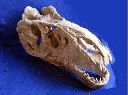 Le crâne d'une étrange créature découvert en Sibérie Img6