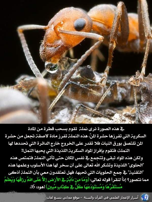 رائع بالصور: من أسرار الإعجاز العلمي في القرآن والسنة F475e977bdec8ab2707eefa8ffd19e38