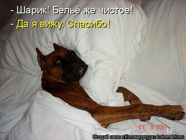 ВЕСЕЛЫЕ КАРТИНКИ Kotomatritsa_F