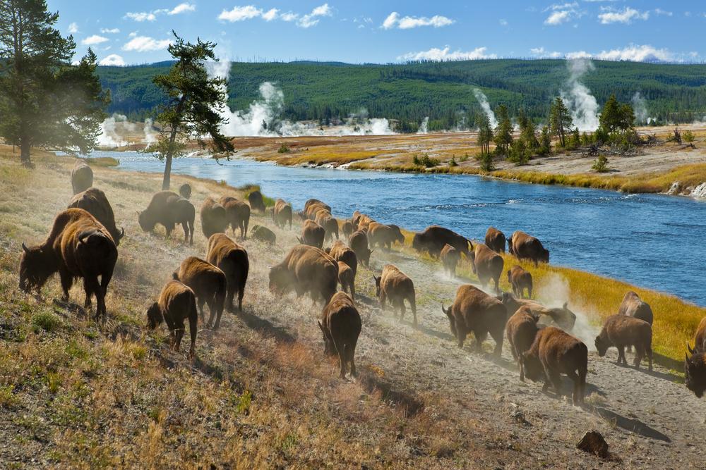 Erik Il Grande Yellowstone-national-park-cheyenne