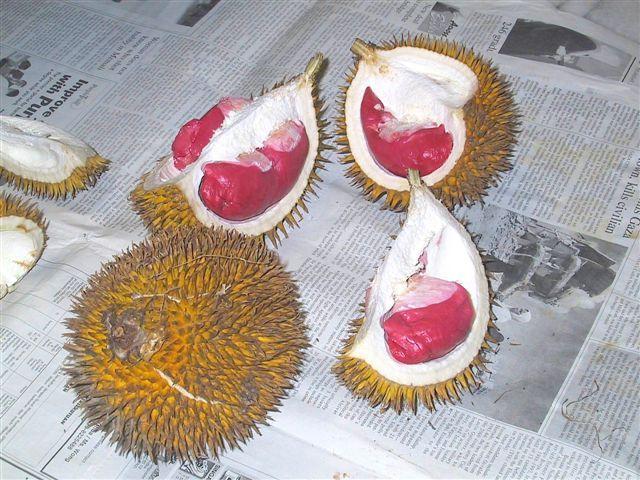 الدوريان -Durian - نباتات كريهة الرائحة ومذاقها لذيذ !!!! Red-durian