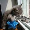 Staff Cat_aiming_gun