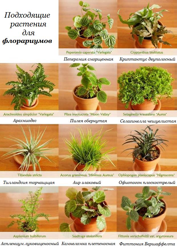 статьи о растениях из  газет и журналов - Страница 7 Original