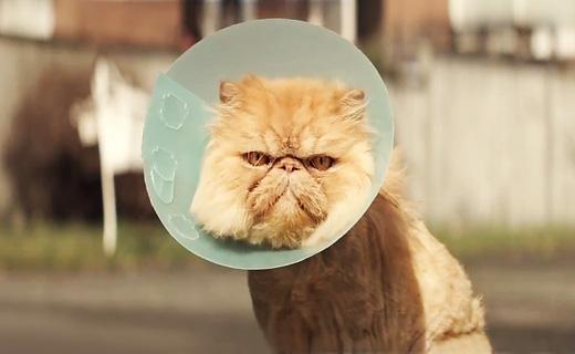 Побрить ли котенка?! (и прочие кошачьи радости) - Страница 11 1f40008894c659f99b612b167c5d7