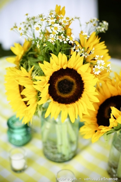 Dạy cắm hoa chuyên nghiệp,dạy cắm hoa nghệ thuật,dạy cắt tỉa của quả ở T.p Vinh Nghệ An 735218_584755be0e727323a1b9b17dae8ff299