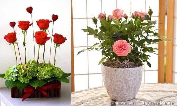 Dạy cắm hoa chuyên nghiệp,dạy cắm hoa nghệ thuật,dạy cắt tỉa của quả ở T.p Vinh Nghệ An 735237_99f0ac9f56f7bec60efb22409d3349a1