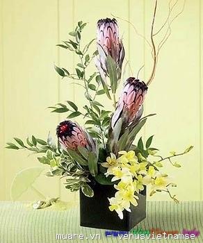 Dạy cắm hoa chuyên nghiệp,dạy cắm hoa nghệ thuật,dạy cắt tỉa của quả ở T.p Vinh Nghệ An 735240_80c585a93777af9d0c4589905aa1f636
