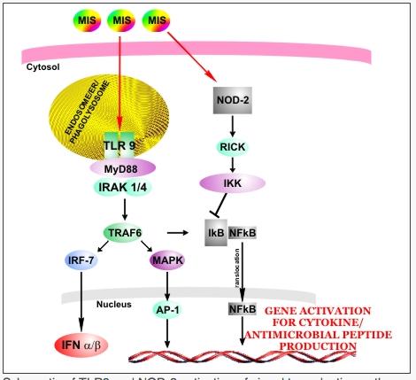 MIS416: pour les SEP PP InnateImmunotherapeuticsgenemot