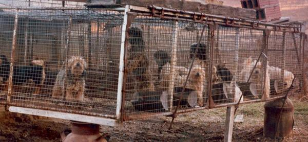 περί αγοραπωλησιών ζώων Puppy-mill4
