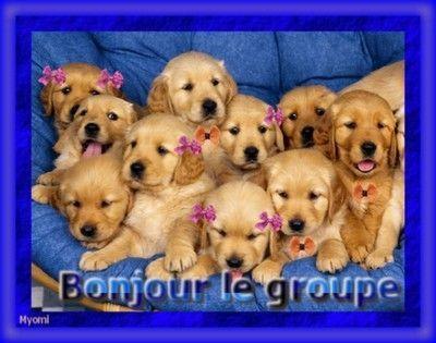 Le Thread du BONJOUR/BONSOIR  les Zanimo's  - Page 5 A1f41565
