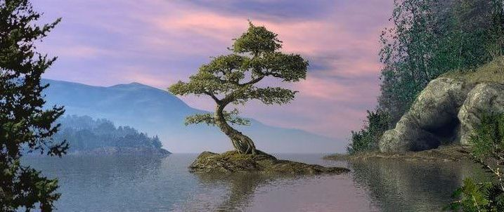 Bienvenidos al nuevo foro de apoyo a Noe #268 / 17.06.15 ~ 22.06.15 Cropped-1-bonsai-tree-on-island-in-water-surrounded-by-land-21