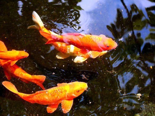 Les poissons en général - Page 2 09126e3d