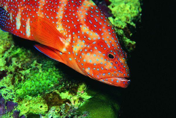 Les poissons en général 10250a0d