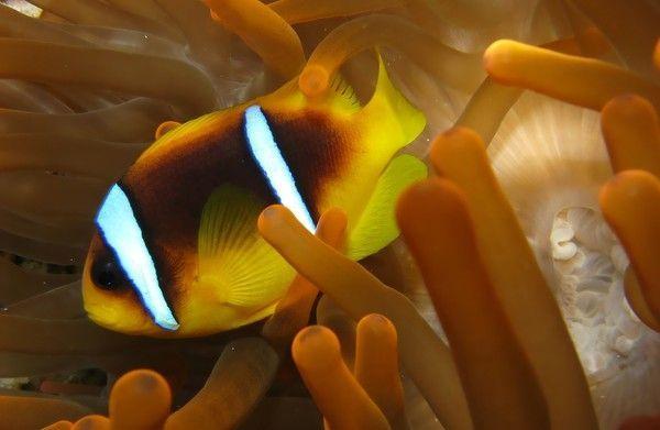 Les poissons en général 68656106