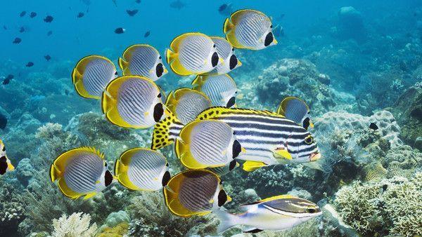 Les poissons en général 78c8d0e1