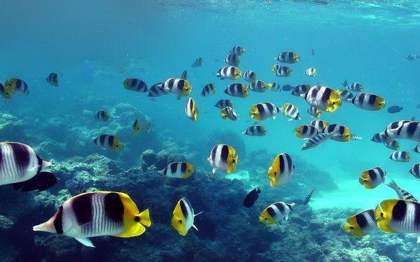 Les poissons en général A26f860e