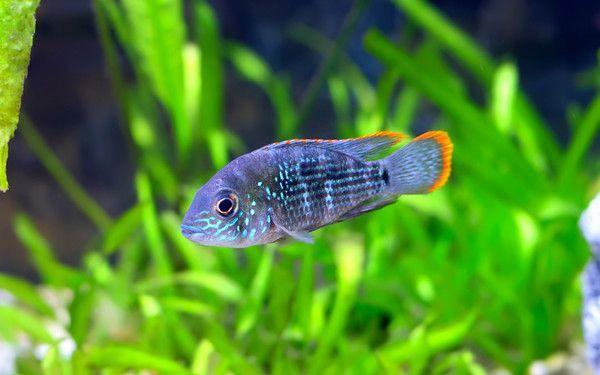 Les poissons en général D22b9e26