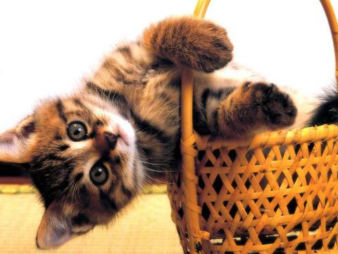 Funny Nice-cat