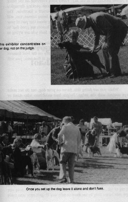 THE WINNING EDGE: SHOW RING SECRETS by George G. Alston with Connie Vanacore. - Страница 2 7c38fbb82251