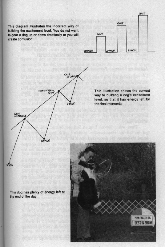 THE WINNING EDGE: SHOW RING SECRETS by George G. Alston with Connie Vanacore. - Страница 2 Abb19bbe0c3a