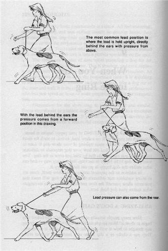 THE WINNING EDGE: SHOW RING SECRETS by George G. Alston with Connie Vanacore. - Страница 2 Bc9c91959873t