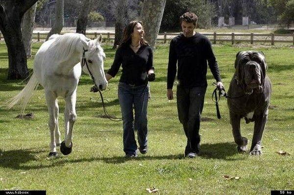 Les chiens les plus , puissants , grands , lourds , petits ,rapides... 2725782b