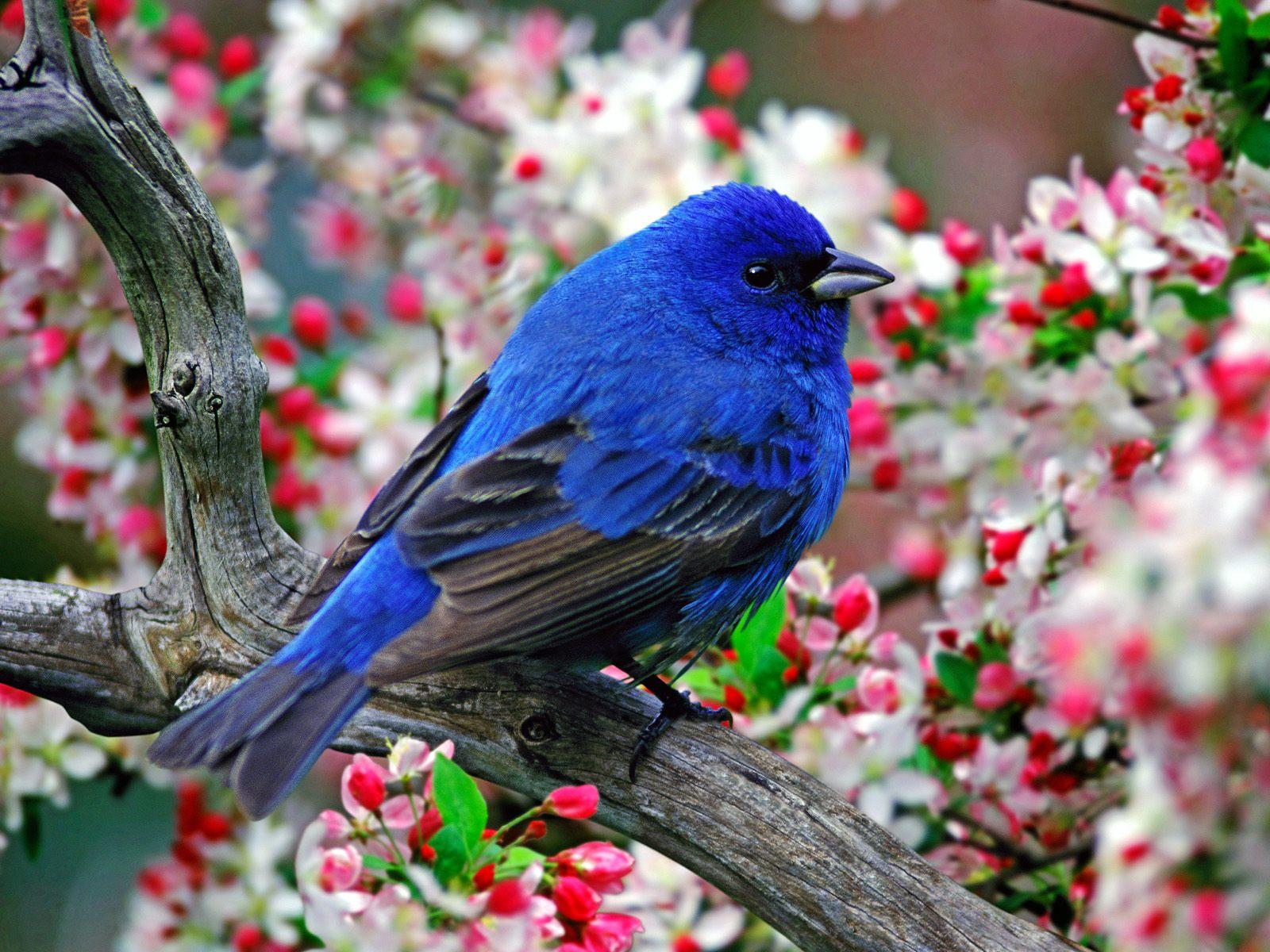 Sve vrste Ptica Ptice-78