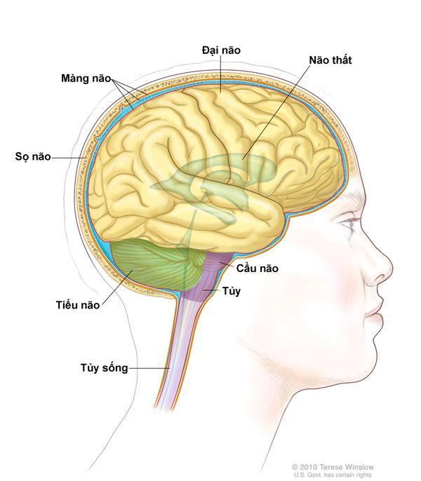 không - Sáu bước đơn giản để giữ đầu óc minh mẫn Hinh-anh-nao-01