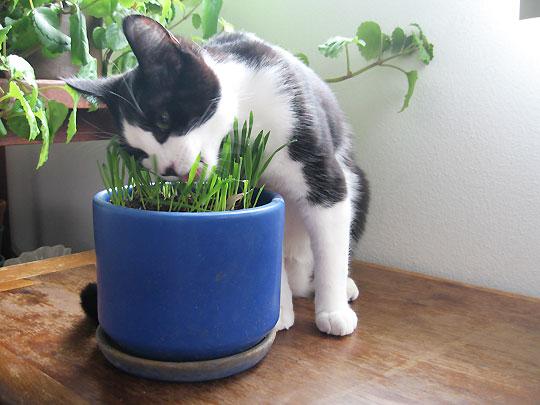 коты и цветы Polza-domashnih-rasteniy