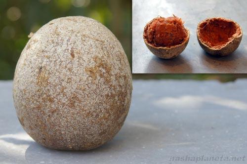 Экзотические фрукты ( фото, название, описание ). Bail