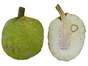 Экзотические фрукты ( фото, название, описание ). Breadfruit