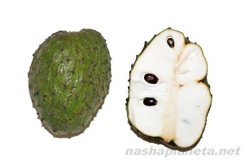 Экзотические фрукты ( фото, название, описание ). Guanabana