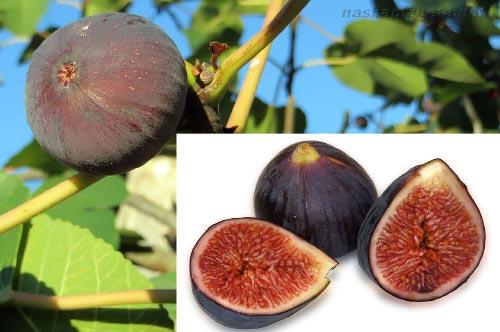 Экзотические фрукты ( фото, название, описание ). Injir