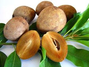 Экзотические фрукты ( фото, название, описание ). Sapodilla