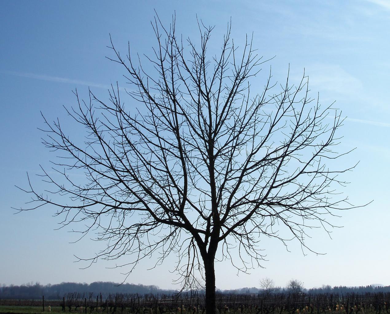 Serait-il possible que notre monde soit en fait une simulation encodée par les mathématiques ? Fractal-tree