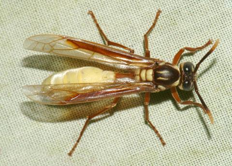 Bộ sưu tập côn trùng 2 - Page 14 DSCF0042